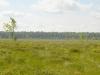Мелколиственные леса окружают болото