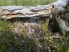 Под поваленным деревом гнездо дербника на земле (фото В. Домбровского)