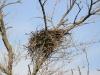 Это гнездо облюбовала самка сокола по имени Thea, помеченная птенцом на западе Румынии в 2012 году
