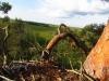 Вид на болото с гнезда канюка