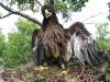 Закільцьоване пташеня