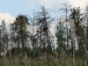 Гніздо на висохшому острівку лісу