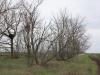Расстояние от гнезда до трассы и полевой дороги