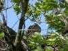 6-го мая в гнезде идет вылупление: 1 однодневный птенец, 1 надклюнутое яйцо + два яйца