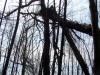 После пожаров лес у гнезда большого подорлика погиб, но гнездо заселено
