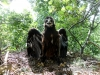 Птенец встретился с орнитологом