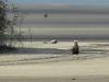 Дорослий орлан на піску
