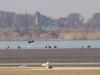 Типова картина: група орланів біля краю води