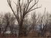 Орлан на присаді, Кременчуцька ГЕС. Фото М. Борисенко