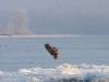 Дорослий орлан-білохвіст, Канівський заповідник. Фото В. Грищенко
