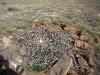 В гнезде степного орла только 1 яйцо (полная кладка)