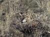 Содержимое гнезда