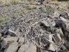 Гнездо степного орла (старое)