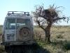 Еще одно гнездо курганника на саксауле