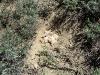 Гнездо болотной совы