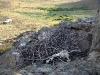 Нежилое гнездо степного орла