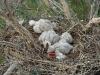 Птенцы спят…
