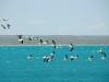 Над водами Балхаша пролетают розовые пеликаны