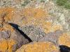 Гнездо курганника, спрятанное под навесом (не жилое)