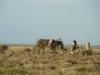 Гнездо степного орла