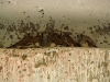 Птенцы об. пустельги в заброшенном ангаре