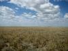 Выженная солнцем трава