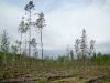 Лесные вырубки привлекают хищных птиц