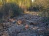 Лесная дорога, перерытая кабанами