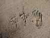 Следы орлана на прибрежном песке
