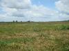 Мелиорированный участок болота Выдра (охотничьи биотопы змееяда, малого подорлика и др. видов хищных птиц)