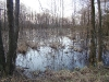 Весенний паводок в южной части болота Бондаревское
