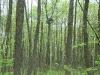 Гнездо малого подорлика на болоте Широкое