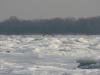 Взрослый орлан над ледяными торосами