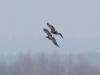 Воздушный дует. Фото Н. Борисенко