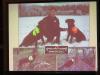 Доповідь № 1. Пошук загиблих шулік за допомогою спеціально навчених псів