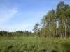 Открытые болота - охотничьи угодья хищных птиц