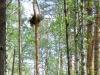 Брошенное гнездо канюка