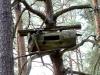 При отсутствии беспокойства, совы гнездятся на бортях