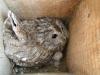 В 2005 году самки сидели в гнездах настолько плотно, что можно было поймать их руками.