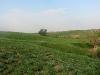 На одиноком тополе расположено гнездо могильника (окр. о. Эльтон)