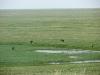 Степные орлы собрались у пресного водоема в степи