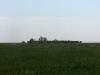 Романенков сад в степи, на самом высоком тополе гнездится курганник
