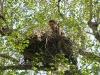 Проверка гнезда курганника (М.Н. Гаврилюк)