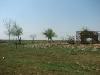 Гнездо курганника на краю хутора