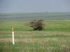 Нежилое гнездо степного орла в Волгоградской области