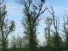 Гнездо могильника в Ставропольском крае