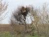 Обследуем гнездо степного орла