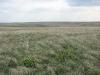 Степи на юге Самарской области
