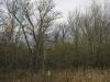 Гнездо орлана-белохвоста в пойме Урала