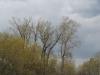 Другое гнездо орлана-белохвоста